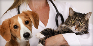 Veterinary Practice Loans and Financing
