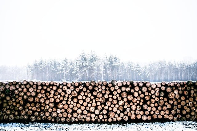 cut up logs in snowy scene