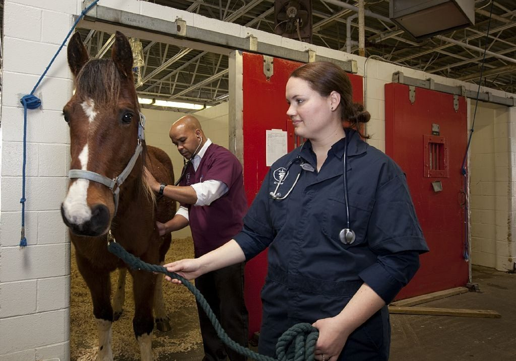 loans for veterinary clinics, veterinary equipment and supplies, used equipment financing, veterinary equipment for lease